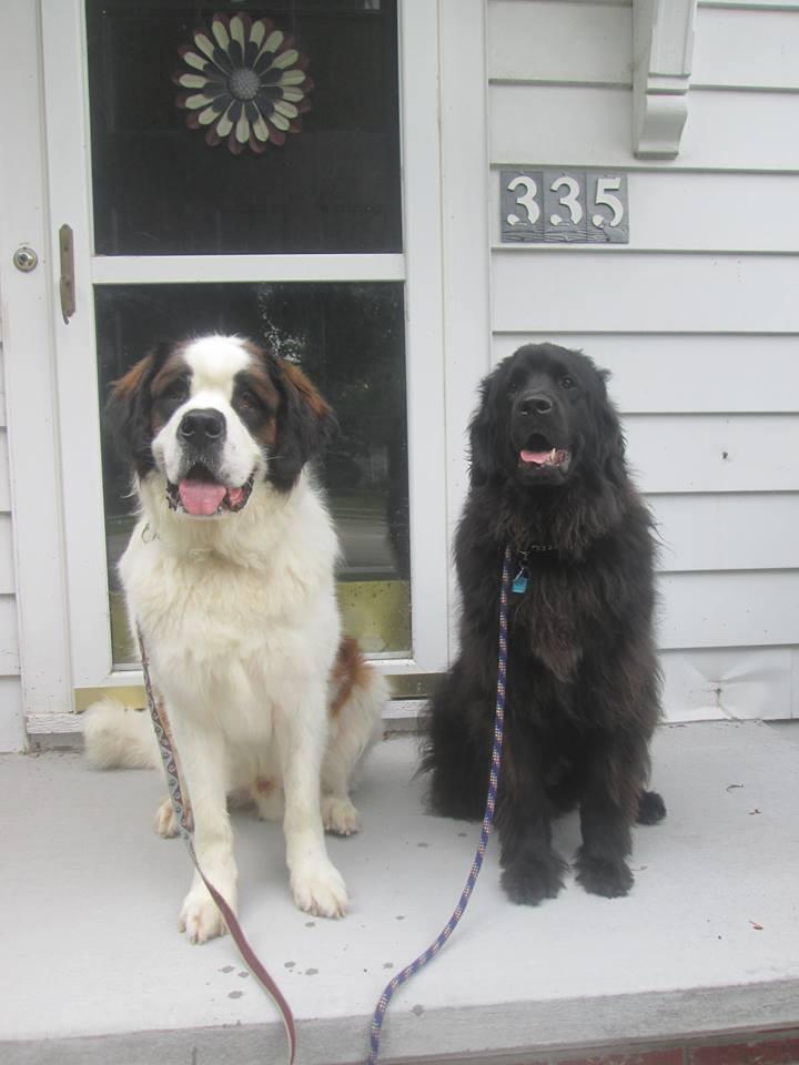 Testimonials – Pet Sitter Galore & More